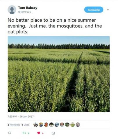 """No better place to be on a nice summer evening. Just me, the mosquitoes, and the oat plots."""
